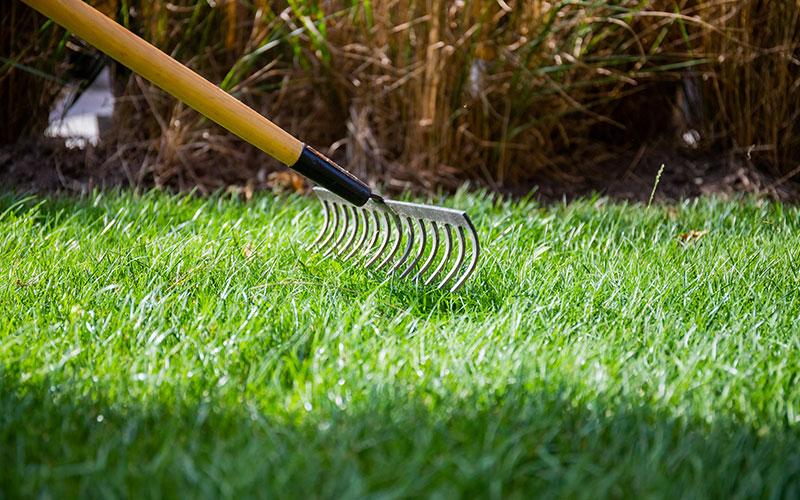 Tips för grönare gräs